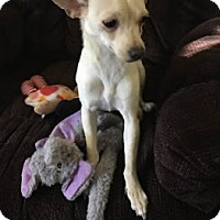 Adopt A Pet :: Lacey - Avon, NY