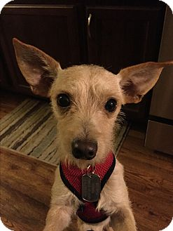 Terrier (Unknown Type, Medium) Mix Dog for adoption in Jersey City, New Jersey - Luke Danes