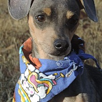 Adopt A Pet :: Cory - Anderson, SC