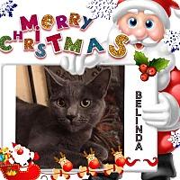 Adopt A Pet :: Belinda - Harrisburg, NC