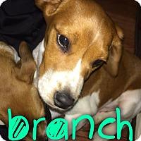 Adopt A Pet :: Branch - Garden City, MI