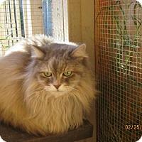 Adopt A Pet :: Glamour - Glendale, AZ