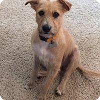 Adopt A Pet :: Sparkle - MEET ME - Woonsocket, RI