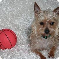 Adopt A Pet :: Harrison - Sioux Falls, SD