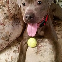 Adopt A Pet :: Kendella/Angel - Manhattan, NY