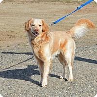 Adopt A Pet :: Indy - Gardnerville, NV