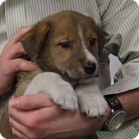 Adopt A Pet :: Manning - Sparta, NJ