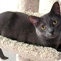 Adopt A Pet :: Janelle - Sterling Heights, MI