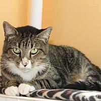 Adopt A Pet :: Baloo - Boca Raton, FL