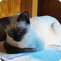 Adopt A Pet :: Willow - Kalamazoo, MI