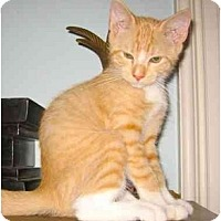 Adopt A Pet :: McSorley - New York, NY