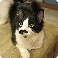 Adopt A Pet :: Jameson - Long Beach, CA