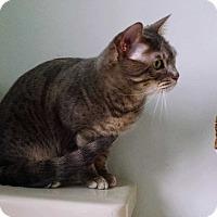 Adopt A Pet :: Sasha - Morgan Hill, CA
