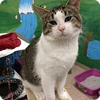 Adopt A Pet :: Finn - Byron Center, MI
