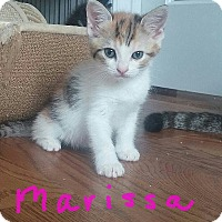 Adopt A Pet :: Marissa - McDonough, GA