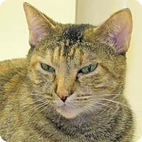 Adopt A Pet :: Iris - Woodstock, IL