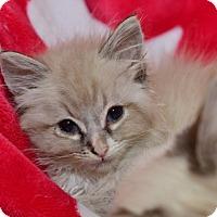 Adopt A Pet :: Lucci - Davis, CA