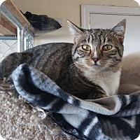 Adopt A Pet :: Chrissy - Modesto, CA