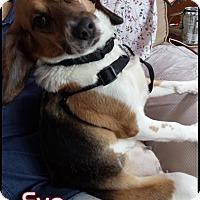 Adopt A Pet :: Eve - Yardley, PA