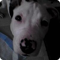 Adopt A Pet :: Luna - Rancho Cordova, CA