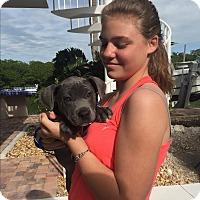 Adopt A Pet :: Elias (courtesy listing) - Homestead, FL