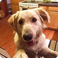 Adopt A Pet :: Cloii - Sparta, NJ