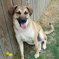 Adopt A Pet :: Maverick - Byhalia, MS