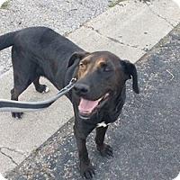 Adopt A Pet :: Captain Ron - Austin, TX
