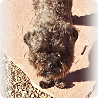 Adopt A Pet :: Fidele - Tijeras, NM