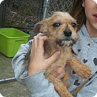 Adopt A Pet :: Selena- In CT - West Hartford, CT