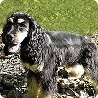 Adopt A Pet :: Max - Sugarland, TX