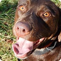Adopt A Pet :: Hershey - Salem, OR