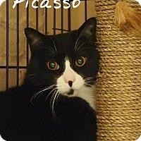 Adopt A Pet :: Picasso - Ocean City, NJ