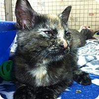 Adopt A Pet :: Gardenia - Trevose, PA