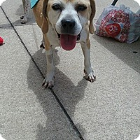 Adopt A Pet :: Diana - Delaware, OH