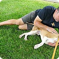 Adopt A Pet :: Max read DNA test - Sacramento, CA