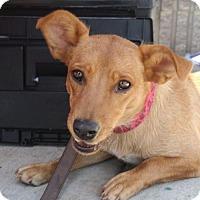 Adopt A Pet :: Mimi - Rockville, MD