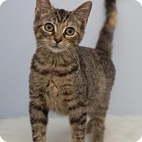 Adopt A Pet :: Madison - Hamilton, ON