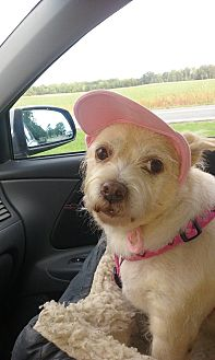 Terrier (Unknown Type, Small) Mix Dog for adoption in Homer, New York - Moria Jo