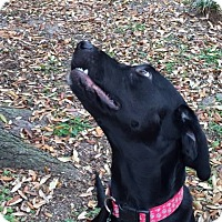 Adopt A Pet :: Chelsea - Brattleboro, VT