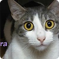 Adopt A Pet :: Tara - El Cajon, CA