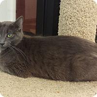 Adopt A Pet :: Charlotte - Gadsden, AL