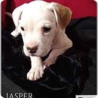 Adopt A Pet :: Jasper Jr. - DeForest, WI
