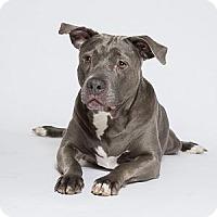 Adopt A Pet :: Lady - Decatur, GA