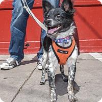 Adopt A Pet :: Justin Hartley - Jersey City, NJ