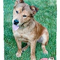 Adopt A Pet :: Riley - Haverhill, MA