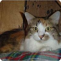 Adopt A Pet :: Bella - Lake Charles, LA