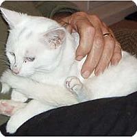 Adopt A Pet :: Whisper - Westfield, MA