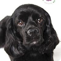 Adopt A Pet :: Sophie - Rancho Mirage, CA