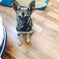 Adopt A Pet :: Lucy - Pompano Beach, FL
